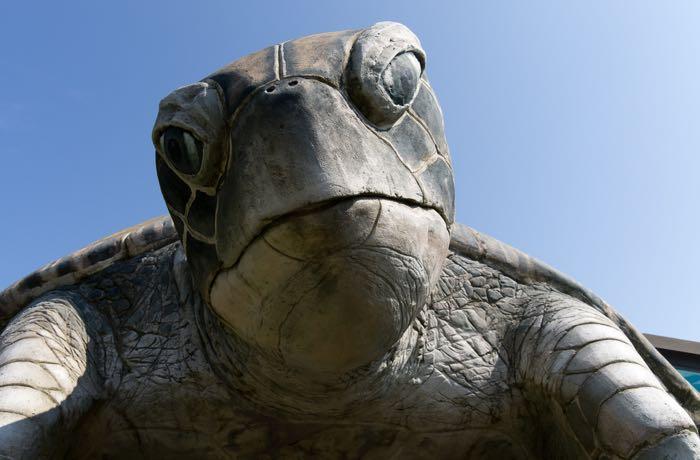 turtle-glass