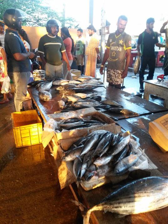 fish fm japan 1
