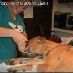 උපුටා ගැනීම-http://www.animalsos-sl.com/#