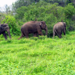 wildlife-forest-protection-sai-sanctuary-india-58f8975d4cf02__700