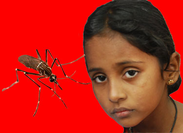 dengue-6